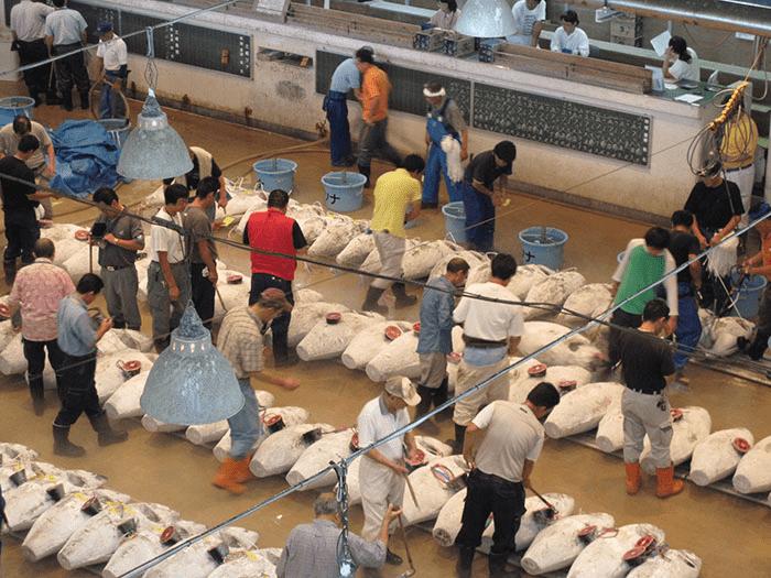 【三浦】「三崎マグロ市場」見学・渡船で城ケ島へ
