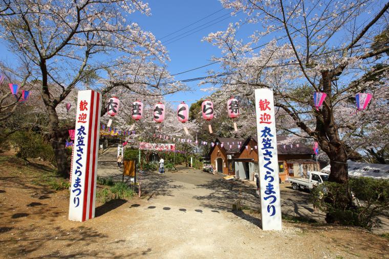 【横须贺】Kinugasa樱花节