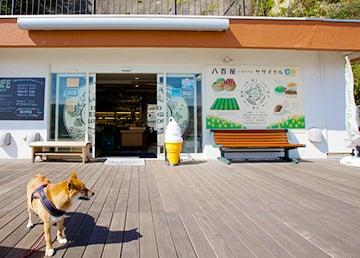 八百屋CAFFEヤサイクル 逗子海岸店