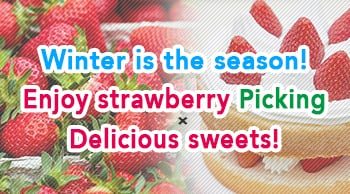 Winter is the season! Enjoy strawberry picking and delicious sweets!