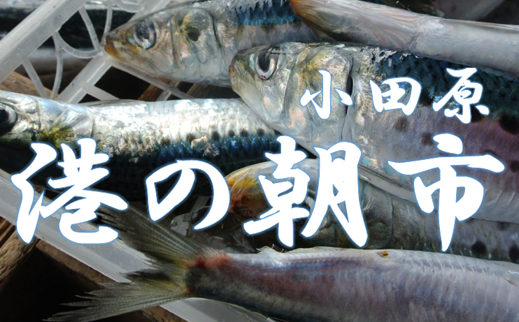 【小田原市】港の朝市(月2回)