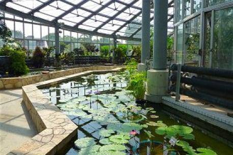 【NEWS】Reopening of Kanagawa Kenritsu Flower Center Ofuna Botanical Gardens