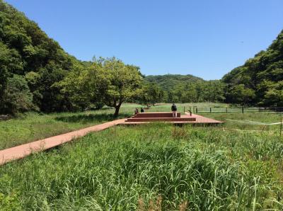 Koajiro no Mori (Koajiro Forest )