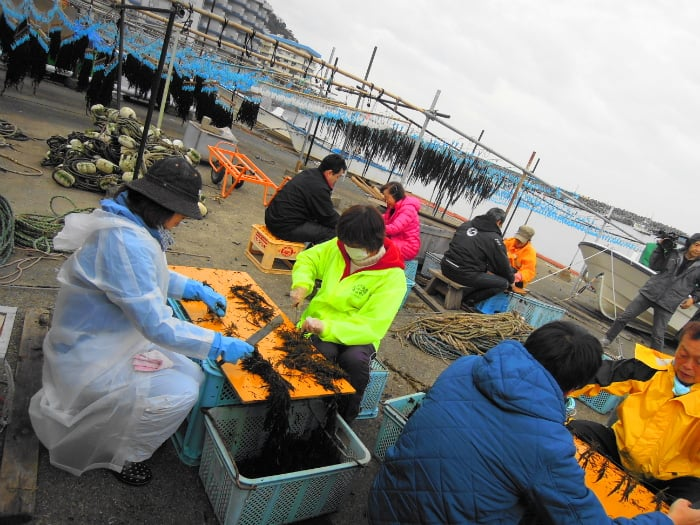 【Zushi】 【From the 2/1 start of reception until next arrival · Prior application system】 Akamoku harvest experience