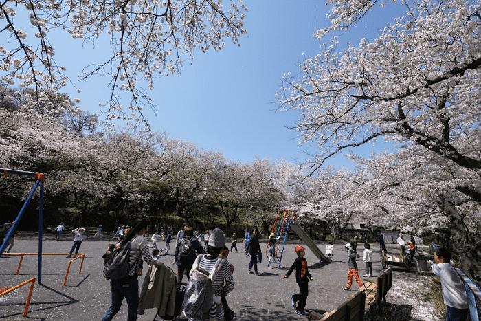 【横須賀】第58回船越南郷公園桜まつり