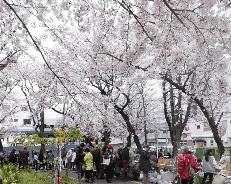 【横須賀】第20回北久里浜桜&芝桜まつり
