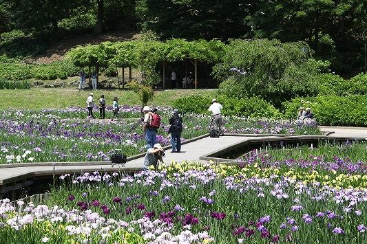 横須賀 しょうぶ園