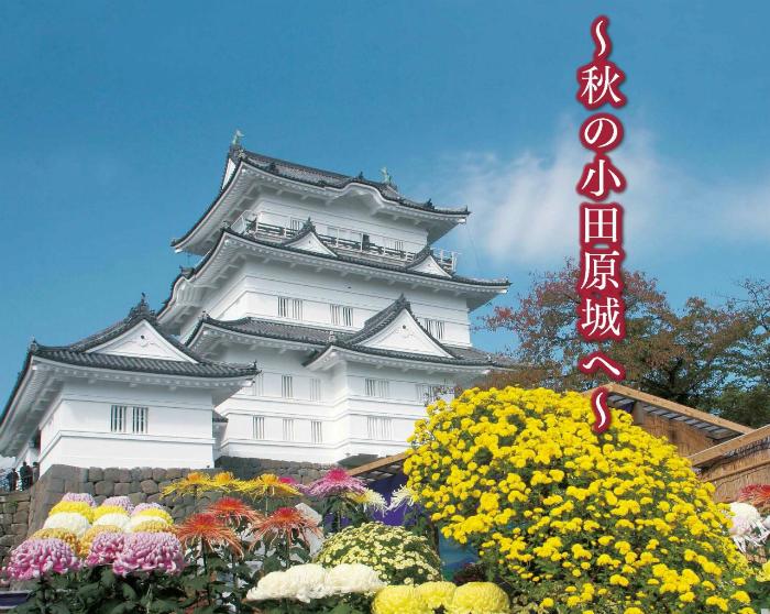 【小田原市】第69回小田原城菊花展