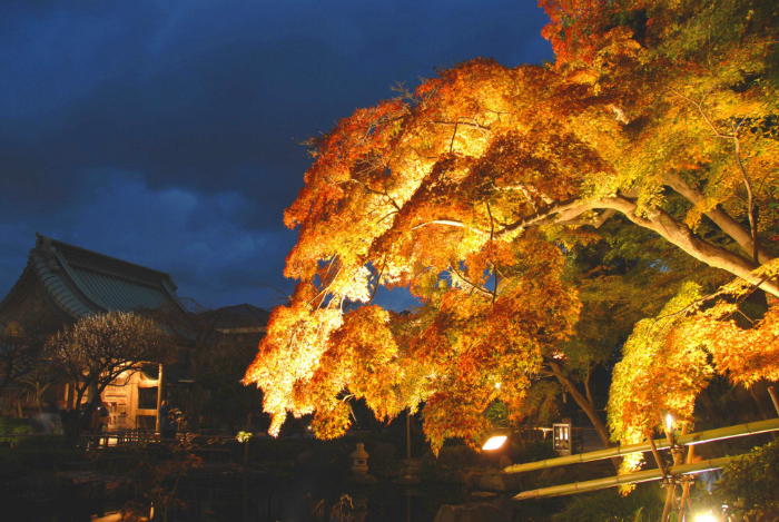 [Kamakura City] Autumn evening special admission