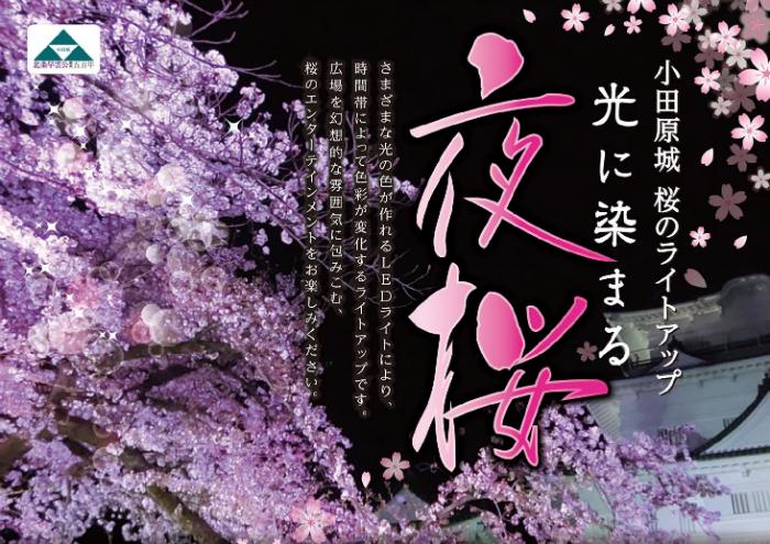 【小田原】本丸広場桜ライトアップ