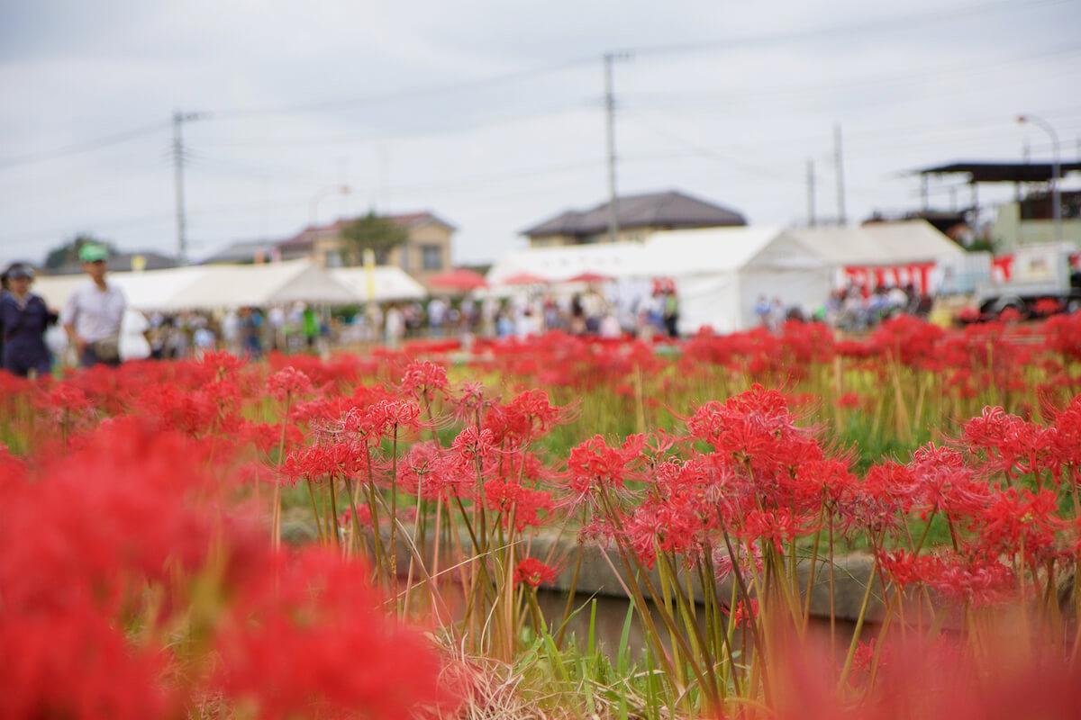 [藤澤市]第12屆Koidegawa群花節