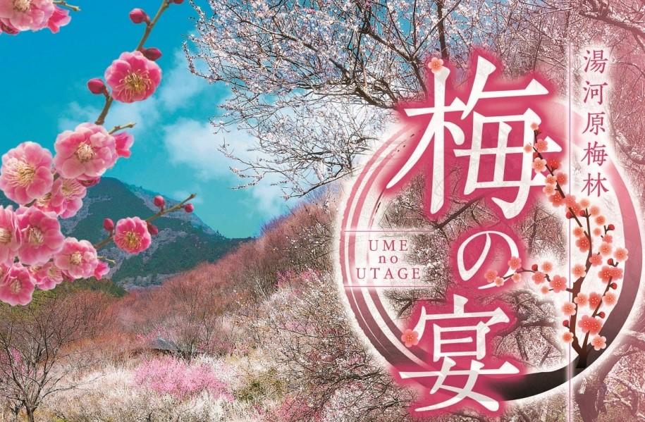 【湯河原町】湯河原梅林 梅の宴